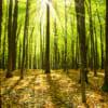 木を見る西洋人森を見る東洋人〜思考の違いはいかにして生まれるか〜